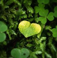 leaf or love? by DeZzibELl