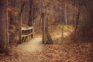 Wooden Bridge by Miles-Sinclair