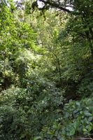 Forest of Carbet in Martinique by A1Z2E3R