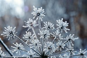 Frozen fireworks 1 by LucieG-Stock