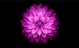 Purple Flower Wallpaper by ivanymathias
