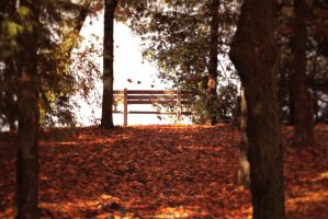 Fall 2012 by TheColourofAir25