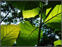 Big Leaves - I'll Hold Your Hands by WillTC