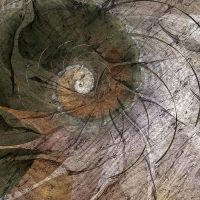 Growth Rings by DigitalPainters