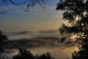 morning fog by valentina----v