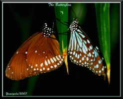 The Butterflies by yamiyalo