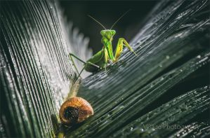 Mantis and the Shell by GJ-Vernon