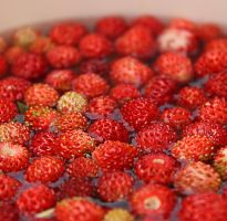 Tiny strawberries by gb-photos