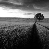 walk the line by Wurstgulasch