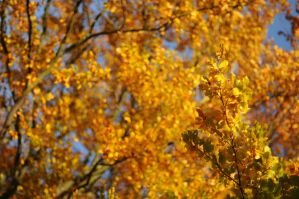 Autumn Leaves Wallpaper by MarcoHeisler