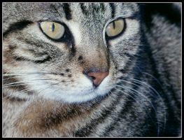 Only a cat by kanes
