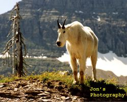 Billy Goat One by twopointeight