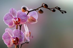 G92 9983 Orchid by Partists