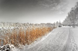 A wintry path by eswendel
