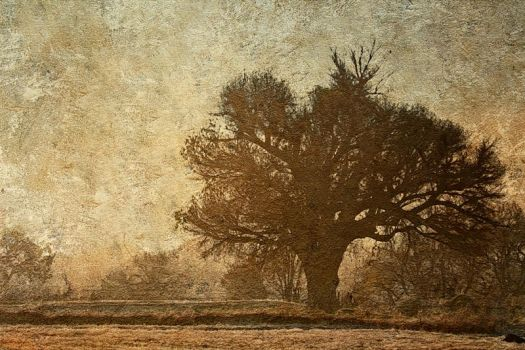 Winter Frost by EMCoetzee