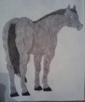 3rd horse drawing colored first by jdg07