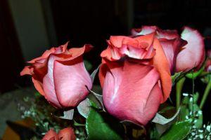 rose2 by MartieRM