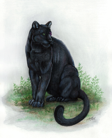 Black Panther by MorRokko