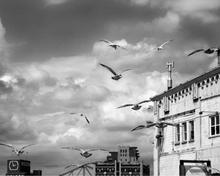 The gulls are coming by kool-kris