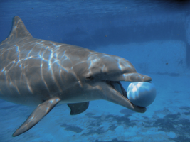 Dolphin by Whiteravens57