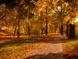 Falling Leaves by Androw911