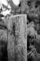 Fence Post by JJTM