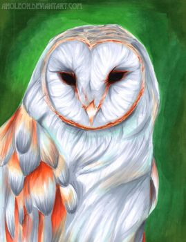 Owl by anoleon