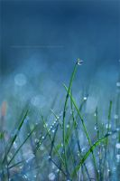 Blue by Stridsberg