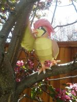 Pidgeotto in a tree by Amber2002161