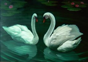 A pair of white swans by BambangMiyarso