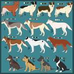 Assorted Breed Imports - OPEN by Bella-Prado