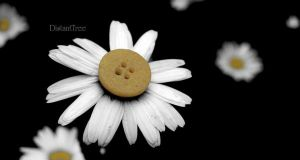 Button Flowers by DistantTree