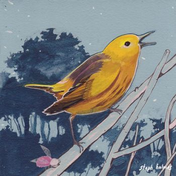 Yellow Warbler by StephHolmes