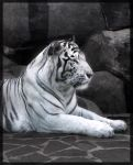 White Tiger by Venlian
