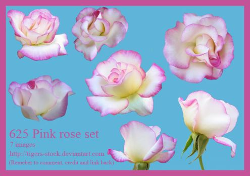 625 Pink Rose Set By Tigers-stock by Tigers-stock