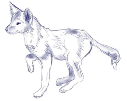 Deanthropomorphicised coyote by lord-nougat