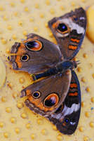 Butterfly stock 5 by caliconcept-stock