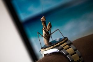 Mr Insect Thing 01 by l4gg