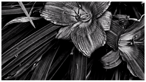 Expulsion From The Garden-monochrome by rickster155