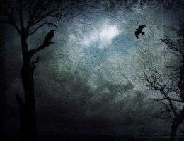 Ravens... by Nuktos