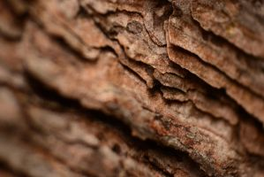 Tree bark by Kitty27Wolfe