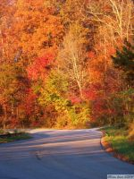 Autumn Road. by TheZoMbieMoshPiT