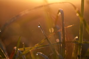 Golden morning dew II by narisign