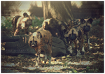 The Pack by MonsterBrand