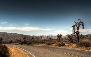 Joshua Tree National Park by myINQI