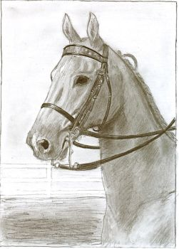 A pencil drawing of a MFT by ChristianCowgirl116