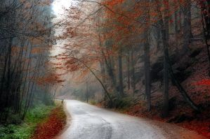 Back to autumn by tomsumartin
