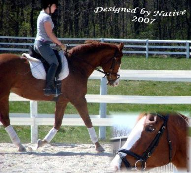 dressage by riley81995