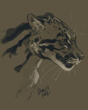Clouded Leopard by TamberElla