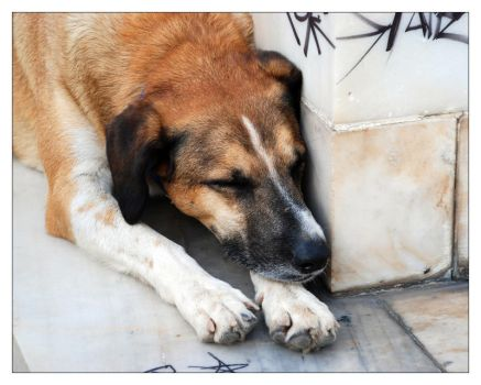 Dogs of Greece: Apollo by triponics